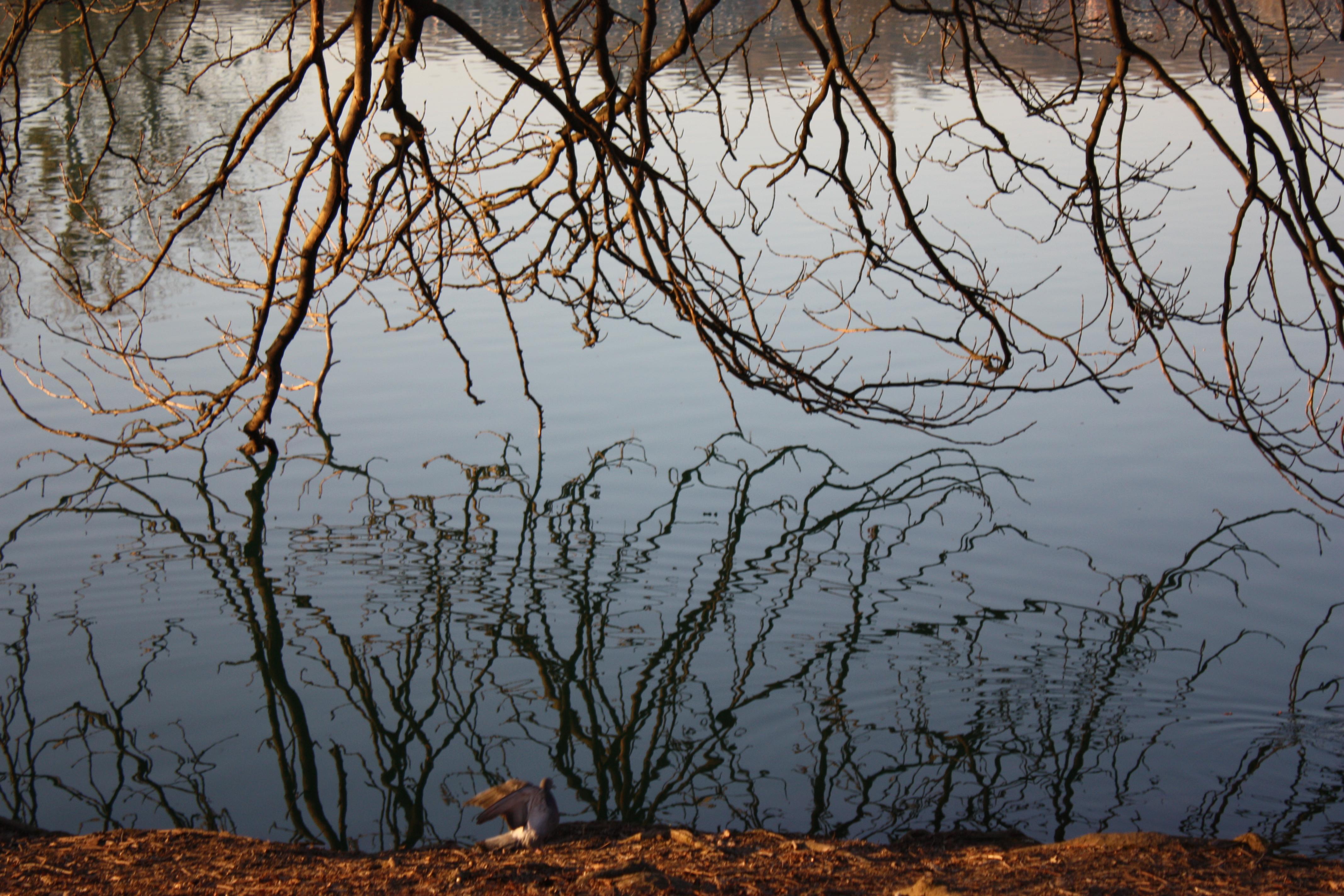 L effet miroir harmonie et partage for Effet miroir sur photoshop